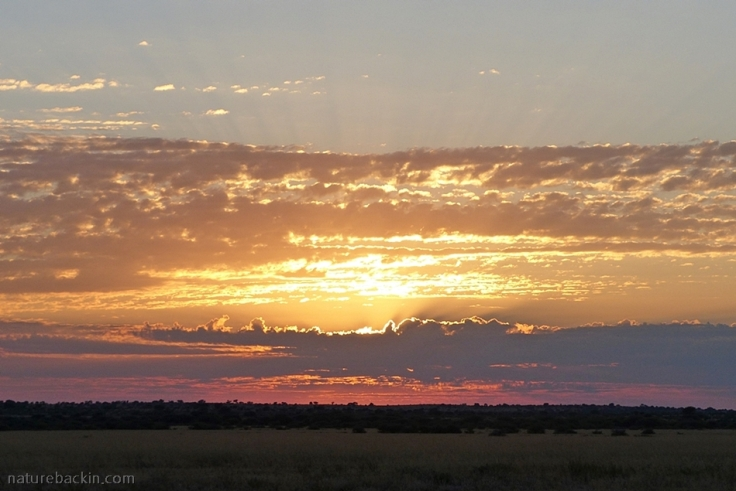 Skyscape at sunrise, Deception Valley, Central Kalahari Game Reserve, Botswana