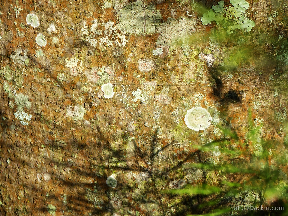 Abstract image of tree trunk bark and lichen