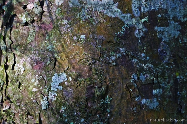 Bark and lichen in close-up