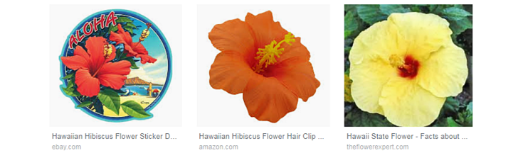 Exotic and indigenous hibiscus flowers in Hawaii