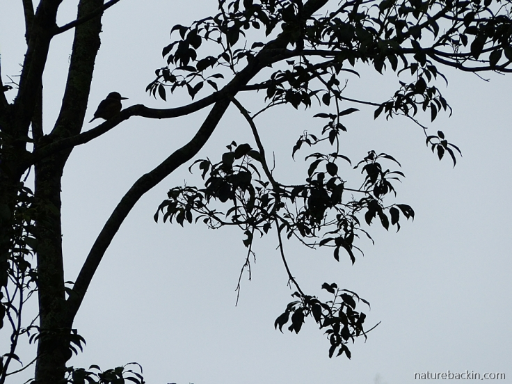Bird-tree-silhouette