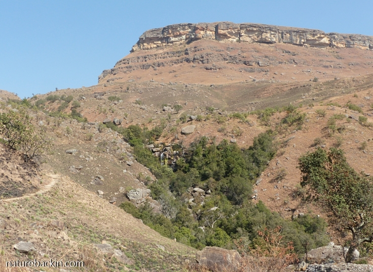 Forested gully and waterfall, Drakensberg