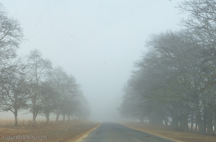 Trees-in-mist-KZN-Midlands-1