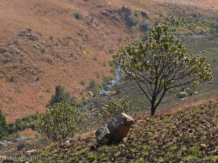 Kamberg-Nature-Reserve-8