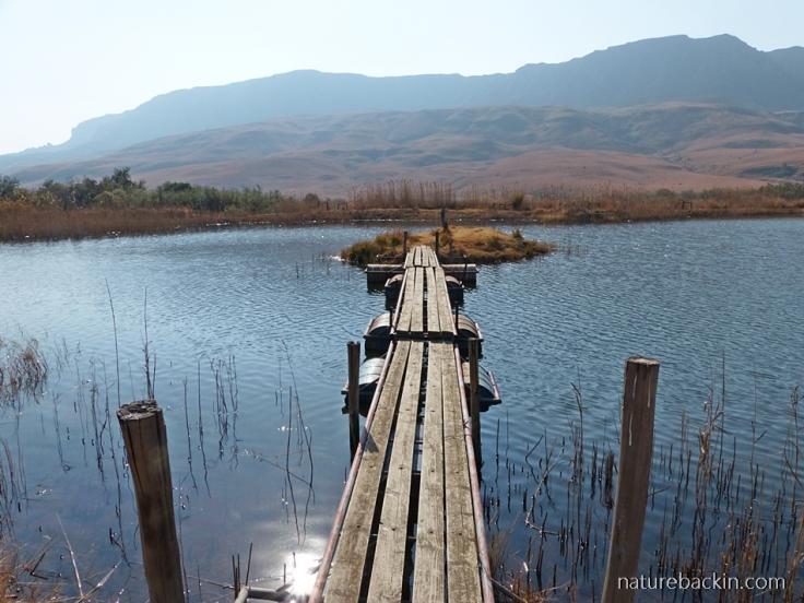 Kamberg-Nature-Reserve-fishing-dam