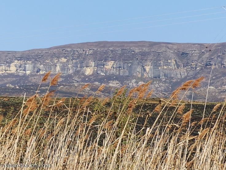 Kamberg-Nature-Reserve-reeds