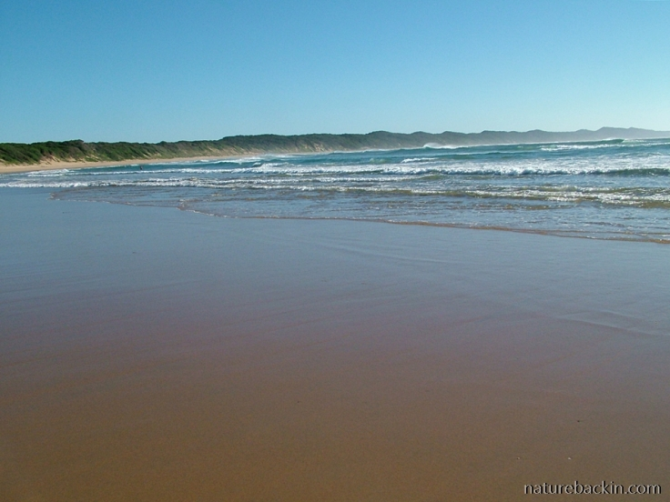 High dunes at Sodwana Bay, KwaZulu-Natal coast, South Africa