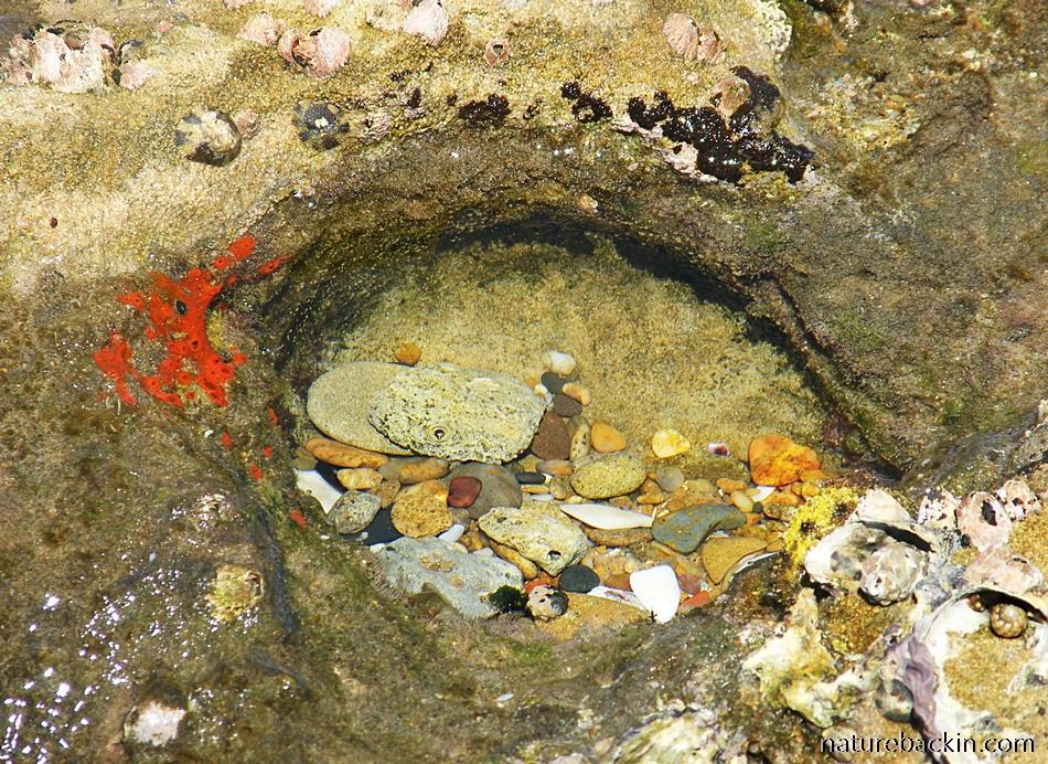 Rock pool in the intertidal zone Maputaland coast