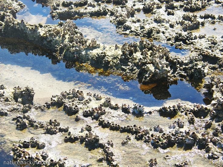 Intertidal-pools-Maputaland