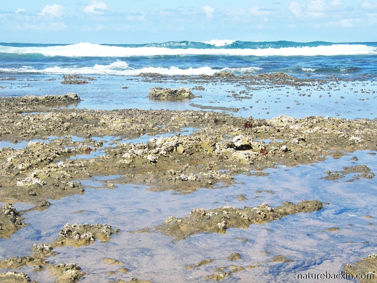 Sodwana Bay breakers and rock pools, Maputaland