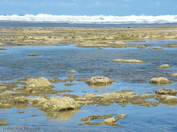 Tide coming in to cover rock pools at Sodwana Bay