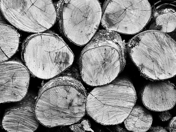 Round cross-sections of logs in firewood pile
