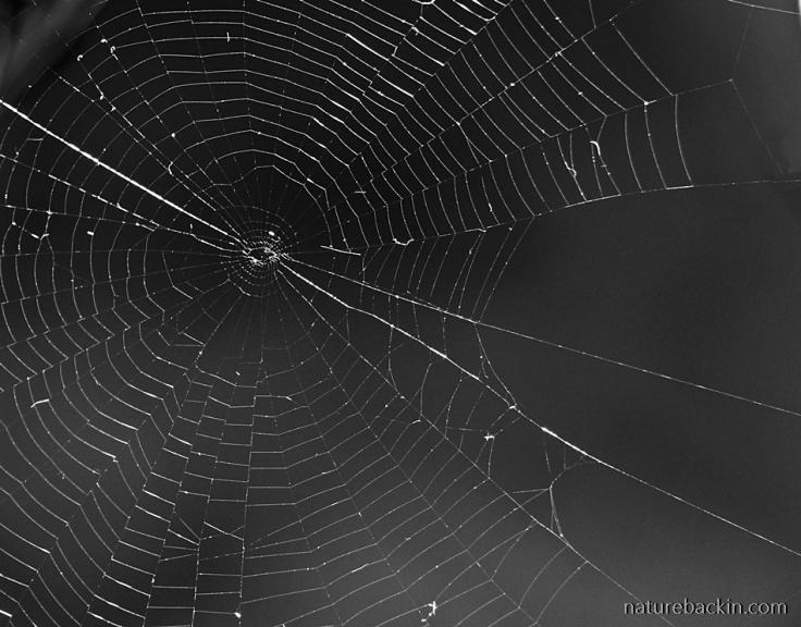 Orb-spider-web