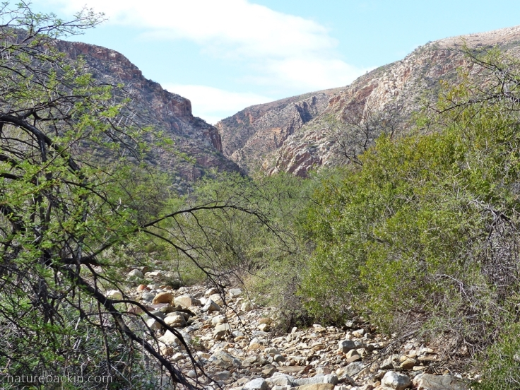 Dry stream bed at Tierkloof trail at Gamkaberg Nature Reserve