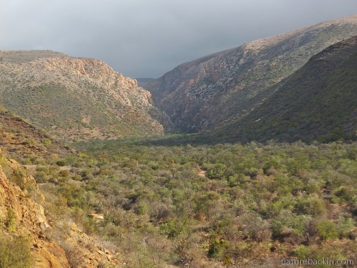 View towards Tierkloof gorge, Gamkaberg