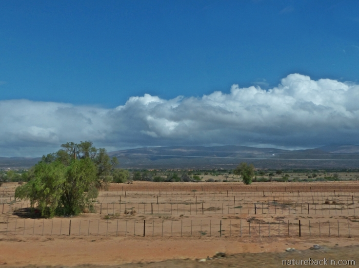 Drought Oudtshoorn ostrich farms