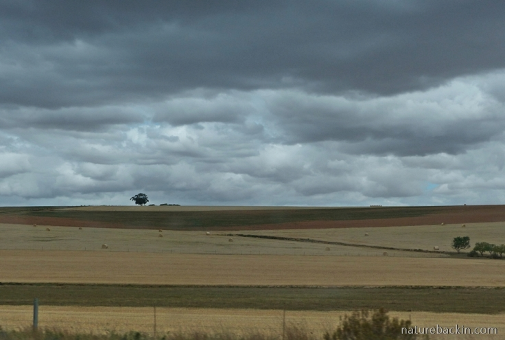 Farmlands Cape with rain clouds