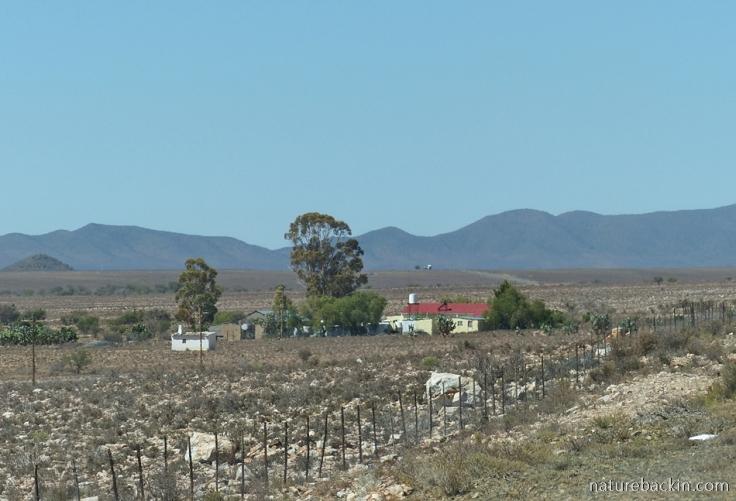 Karoo-farm