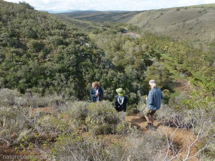 Admiring the fynbos on a walking trail at Wildlife Rescue Nature Reserve, Western Cape, South Africa