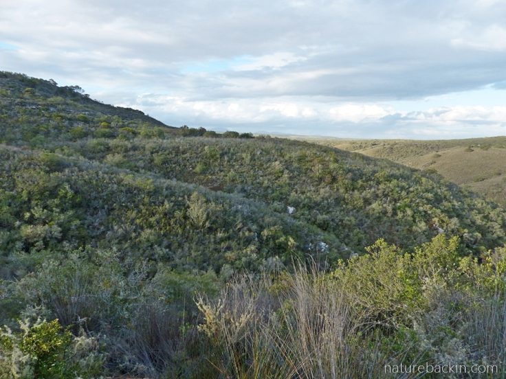 View from cottage accommodation, Wild Rescue Wildlife Rescue and Nature Reserve, Western Cape, South Africa