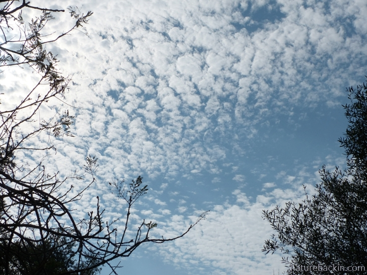 Dappled clouds high in the sky