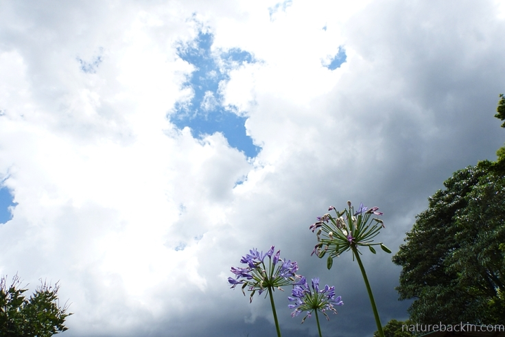 Storm clouds starting to gather over a suburban garden, South Africa