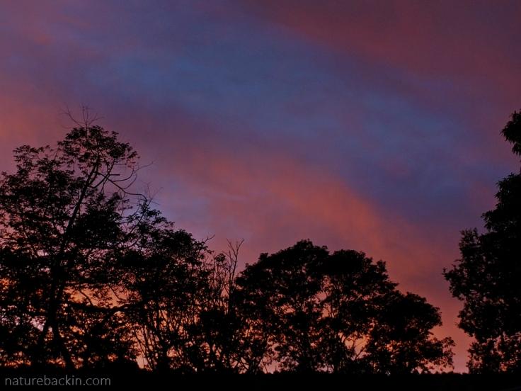 A lurid sunset taken from a garden in the suburbs, KwaZulu-Natal