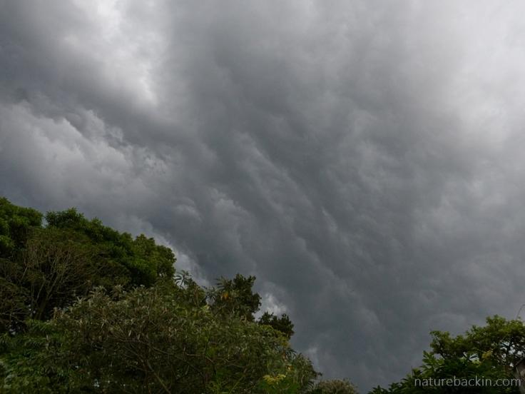 A storm starting over a suburban garden