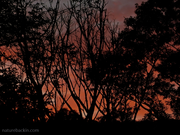 Trees patterning a sunset glow in the sky