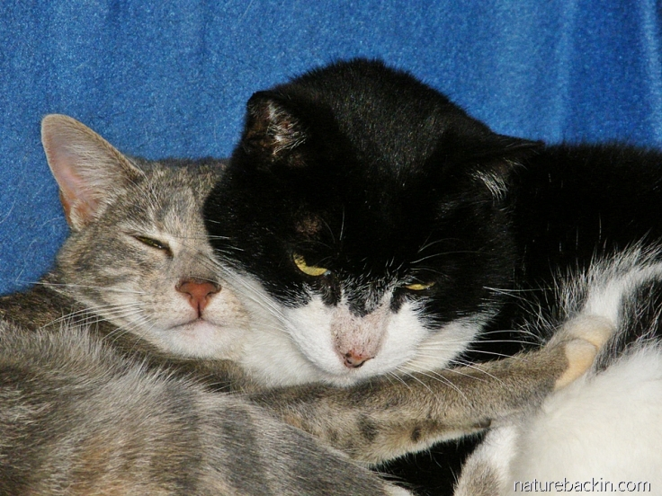 Cats cuddled together
