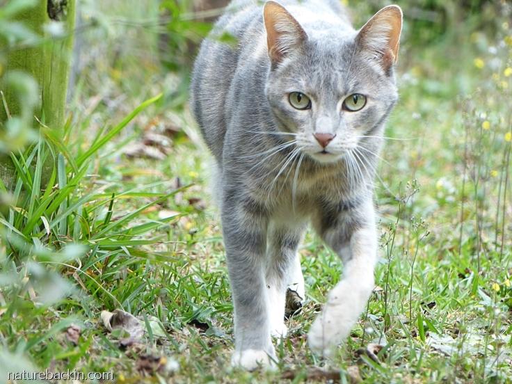Cat walking in garden