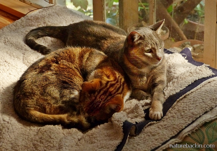 Cat friends,  both adopted feral cats