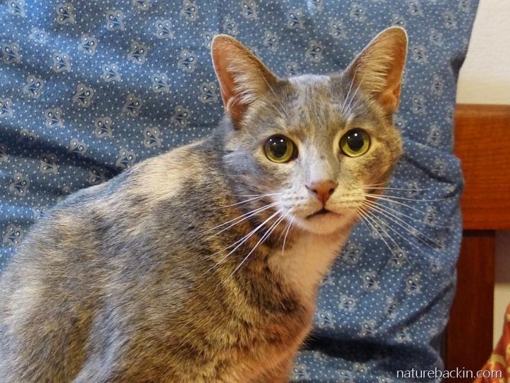 Portrait of rescued feral kitten, now aged 9