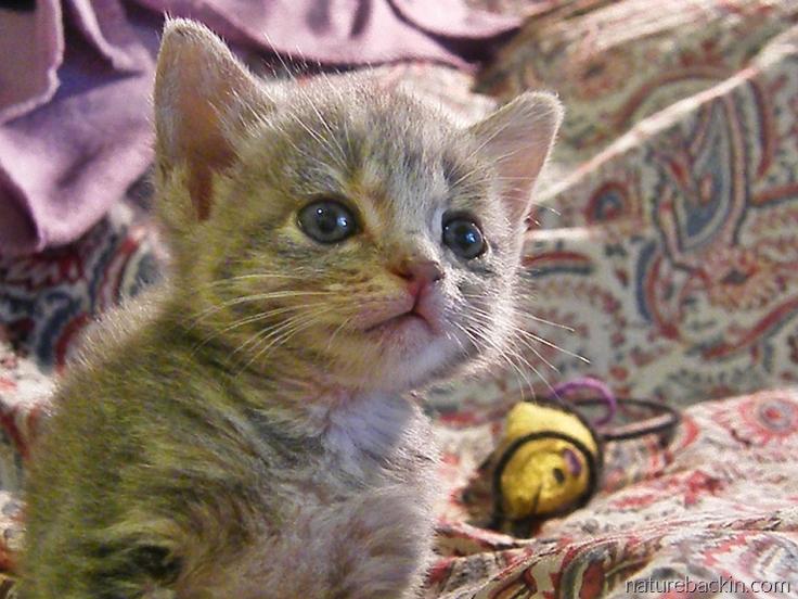 Kitten a few weeks old