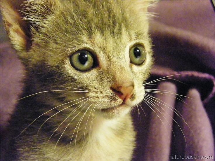 Kitten at six weeks