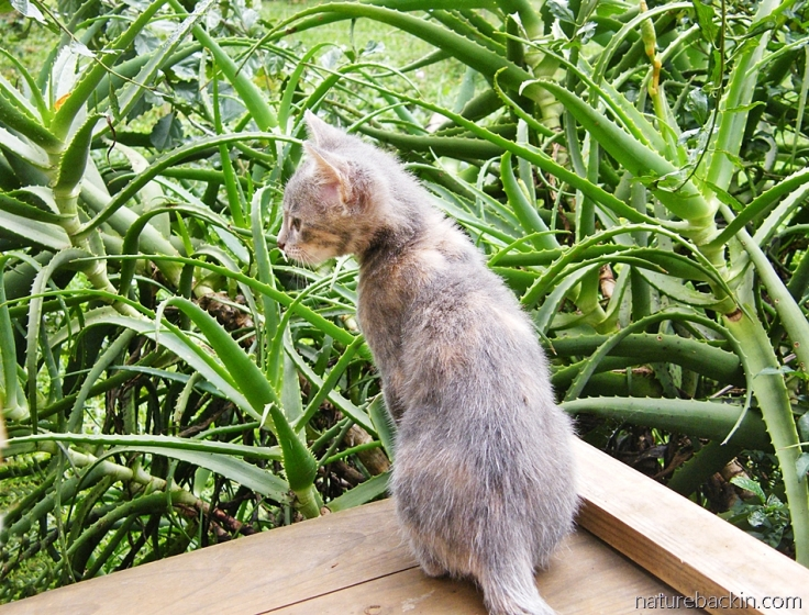 Kitten exploring outdoors