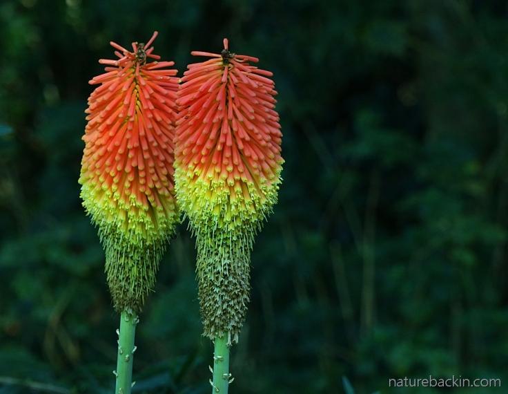 Rainbow-colours-flowers 7