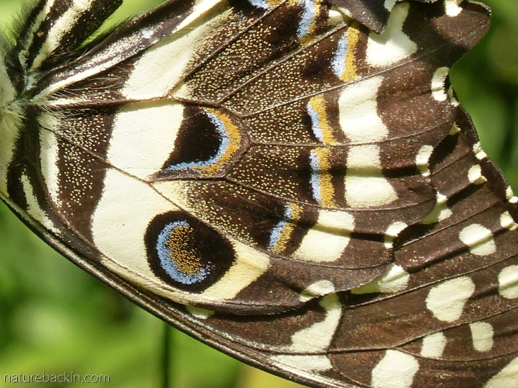 Close-up of butterfly wing