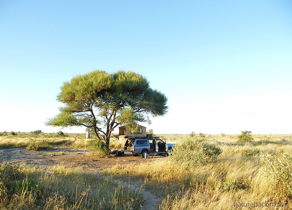 Lone tree at Phokoje campsite at the Central Kalahari Game Reserve, Botswana