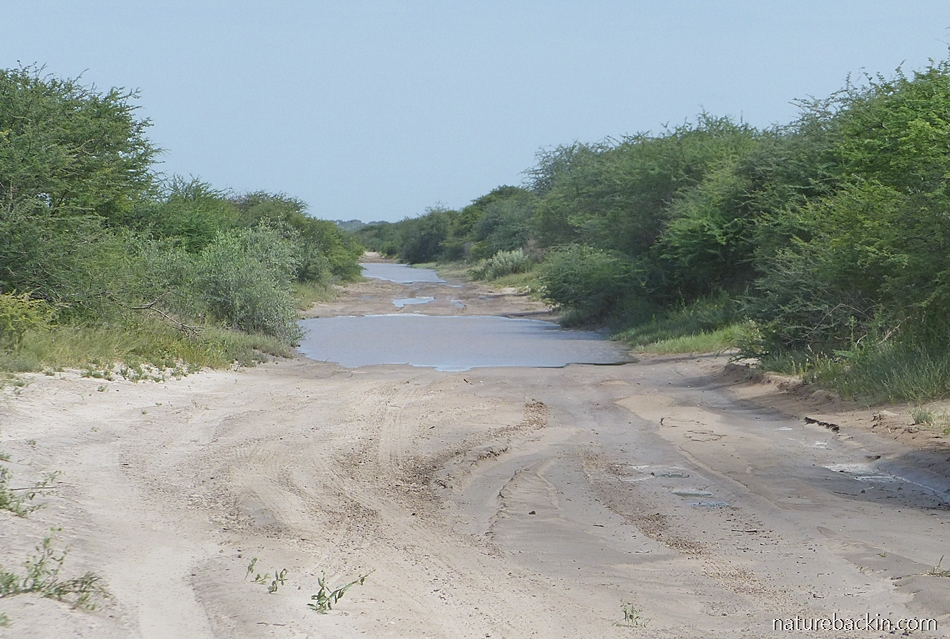 Road after rain into the Central Kalahari Game Reserve, Botswana