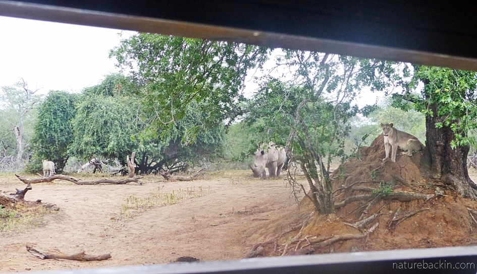 View from the hide at KuMasinga, Mkhuze Game Reserve