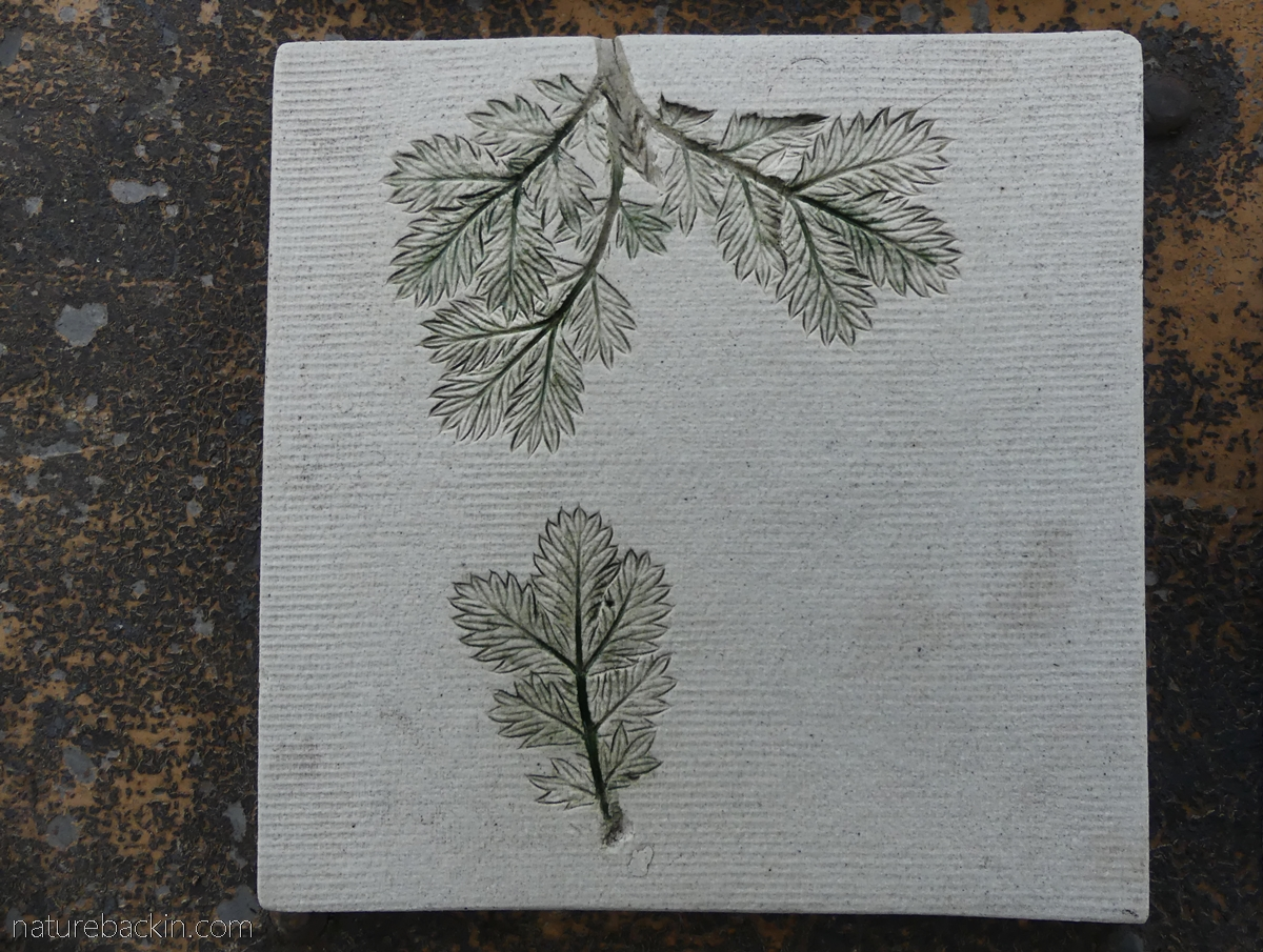 Ceramic tile featuring impressions of Ouhout leaves
