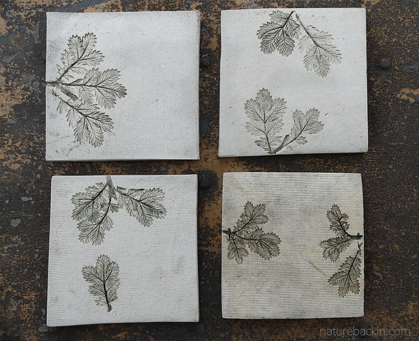Ceramic tiles featuring impressions of Ouhout leaves, Eastern Cape, South Africa