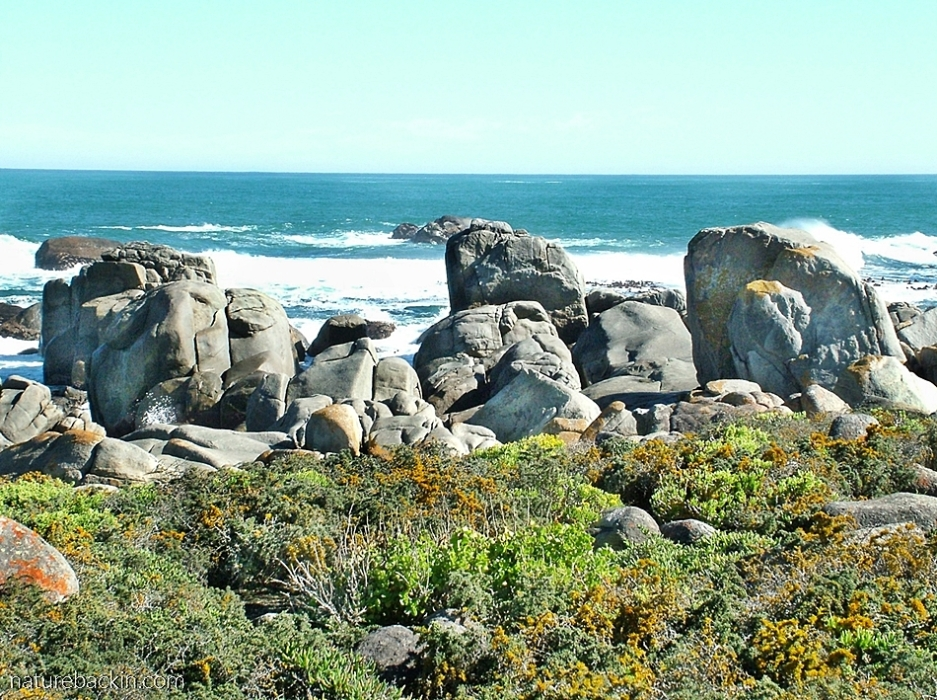 Granite boulders on the Atlantic shoreline, West Coast National Park, South Africa