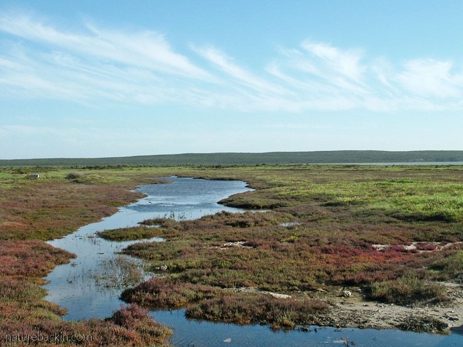 Marshland at Langebaan Lagoon wetlands, West Coast National Park