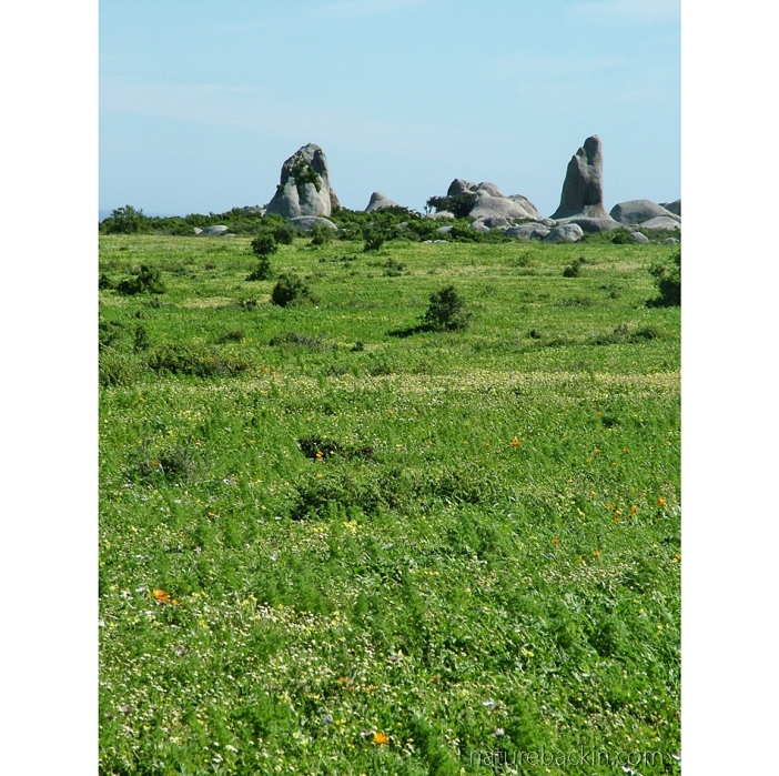 Granite Vingerklippe, Postberg nature reserve, Western Cape
