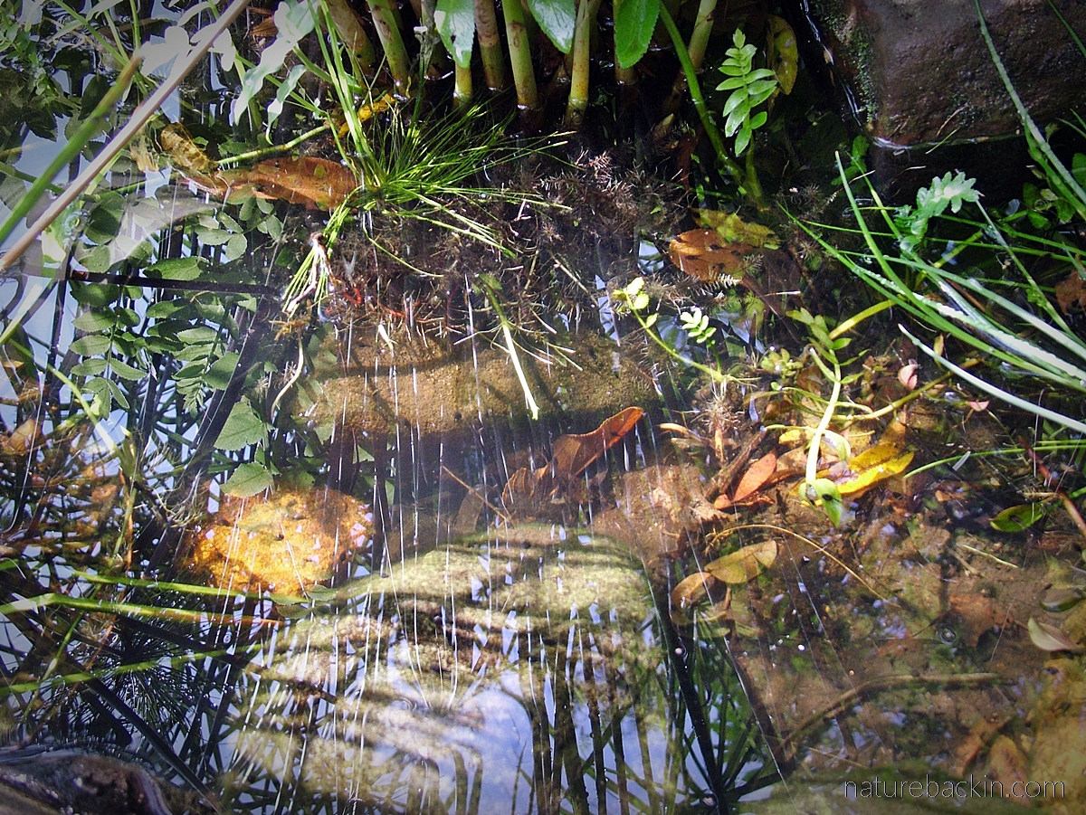 Garden pond patterns and reflections