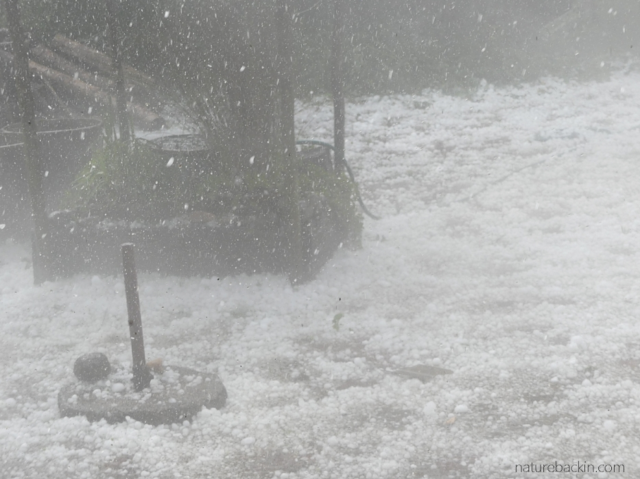 Hailstorm with a heavy fall of hail stones