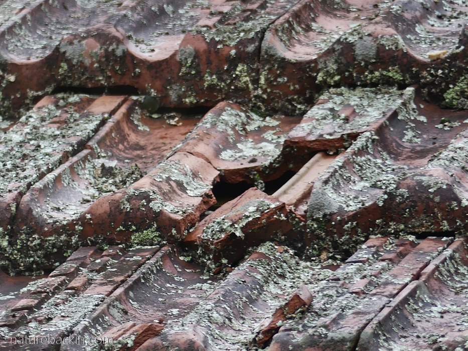 Roofing tiles cracked by hail stones