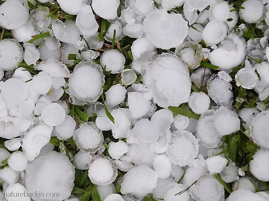 Fallen hailstones